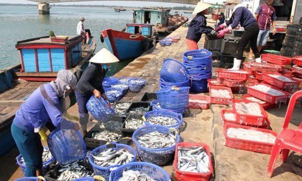 Il disastro ambientale lungo la costa del Vietnam centrale