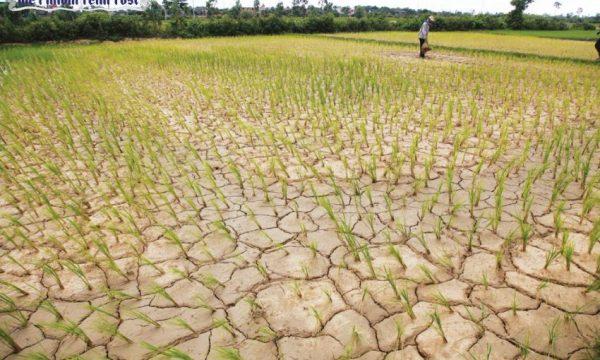 Settore risicolo cambogiano tra clima debiti siccità e la crisi con la UE