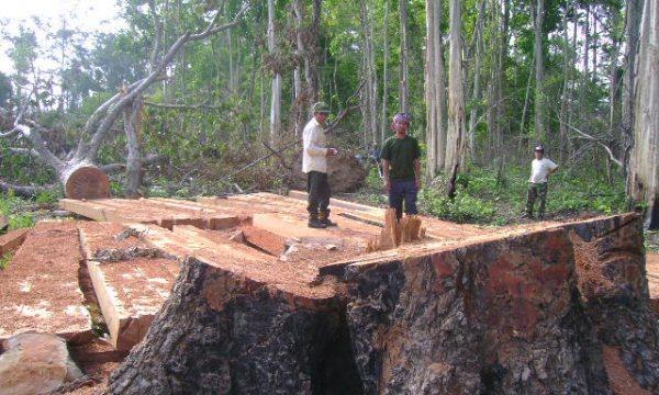 Denudate aree immense di foreste di aree protette della provincia di Ratanakiri