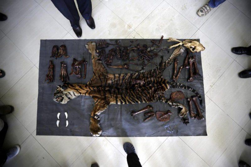 Commercio illegale di fauna selvatica e le banche del ASEAN