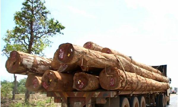 Il commercio illegale di legname in Myanmar non teme il COVID-19