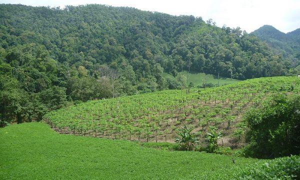 Sconfinamento nella foresta nel parco nazionale di Pha Taem sul Mekong