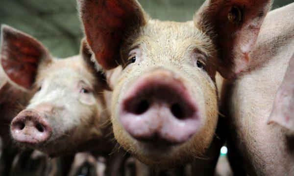 Due persone l'ora morte per infezioni resistenti agli antibiotici in Thailandia