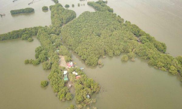 Le mangrovie abbattute sono oggetto di contesa per un progetto aeroportuale nelle Filippine