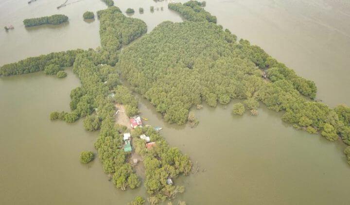 mangrovie taliptip