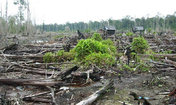La svolta indonesiana verso un'economia a basso tenore di carbonio