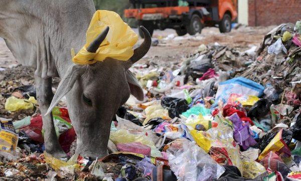Sistema di gestione dei rifiuti per non uccidere gli animali con la plastica