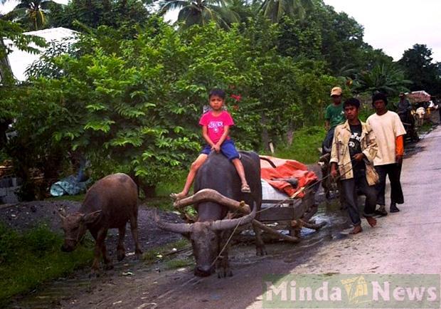sfollati cotabato